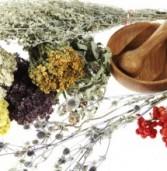 Растения в традиционной медицинской культуре мордвы