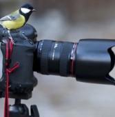 В Удмуртии объявлен экологический фотоконкурс