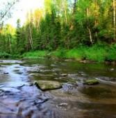 «Экологическая среда» начнётся в Коми