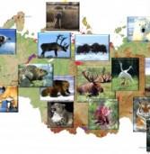 От Москвы до Владивостока: В четырех городах России откроются заповедные выставки